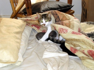 Everyone Needs a Cushion